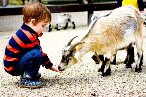 How to Start a Petting Zoo