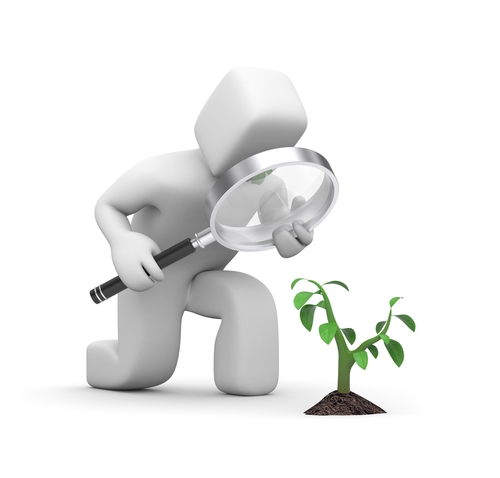 How to Start an Arborist Business