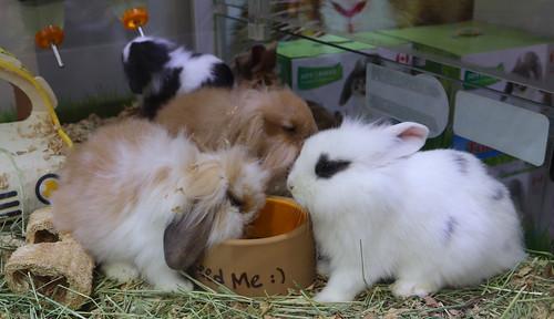 How to Start a Pet Shop